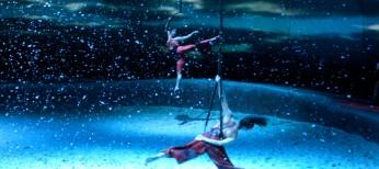 Cirque Du Soleil Cavalia Photos