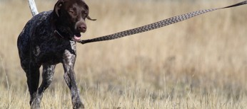 Leash Training 101: How to Train Your Dog to Walk on a Leash