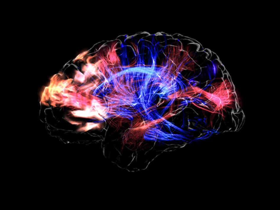 Mickey Hart Brain Music