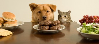 7 Foods That Are Toxic to Your Pets