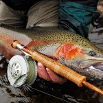 Steelhead Trout Flyfishing
