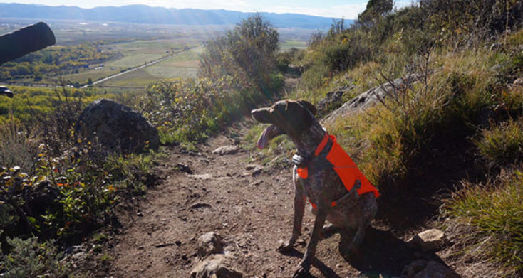 Ruffwear Quinzee and Track Jacket Review