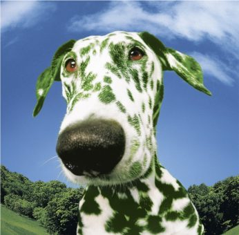 Top 5 Green Pet Products