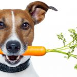 Top 8 Dog Products for 2021