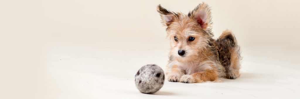 Purrfectplay wool ball