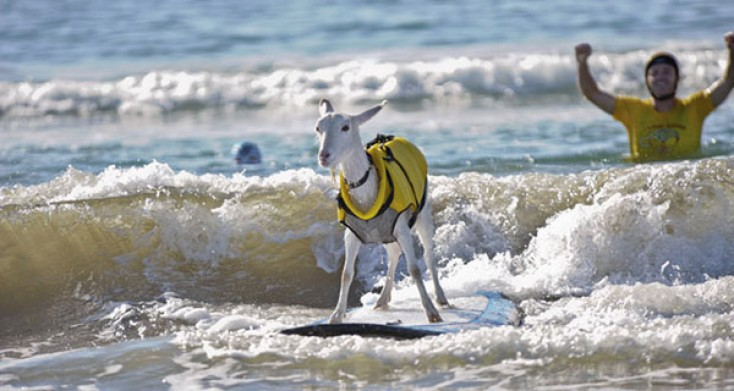 Teach your Pet How to Surf!