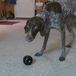 KONG Extreme Dog Toy Review