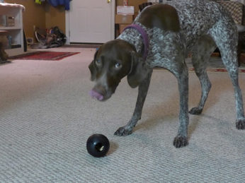 KONG Extreme Toys for Dogs