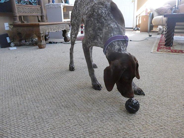 Planet Dog Coal Ball Photo Mike Hardaker   Mountain Weekly News