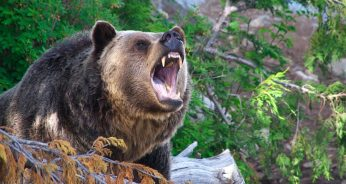 These Bear Encounter Tips May Just Keep You Alive Outside Your Cubical