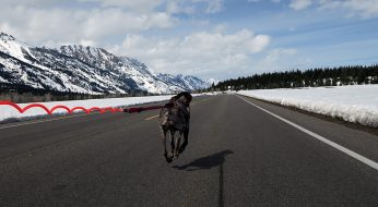 Grand Teton National Park Road is Open