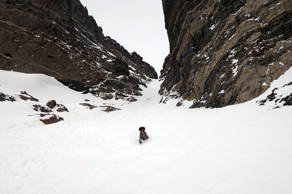 Dog skiing Radio Tower Couloir Togwotee Pass