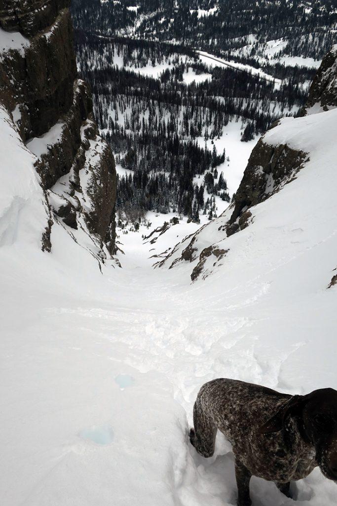 Dog Skiing Teton Couloir Togwotee Pass Wyoming