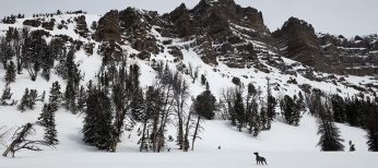 Splitboarding & Climbing Radio Tower Couloir with my Dog on Togwotee Pass
