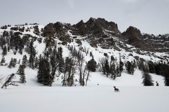 Splitboarding & Climbing Radio Tower Couloir with my Dog