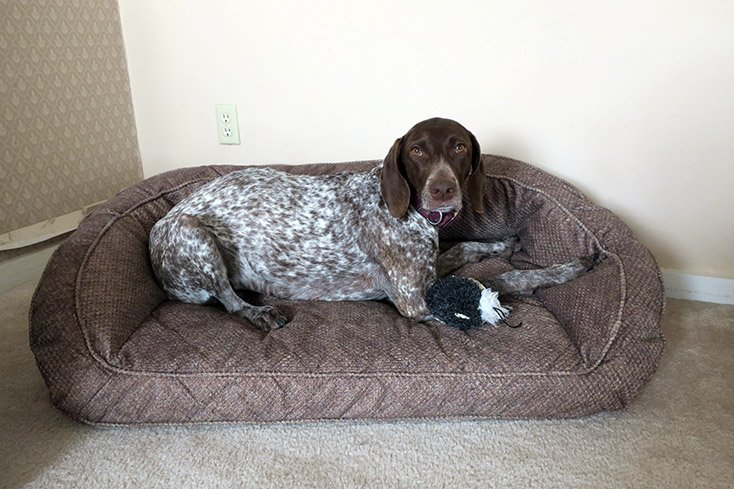the orvis memory foam bolster dog bed is built like a couch