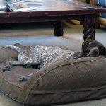 Orvis Memory Foam Bolster Dog Bed Review