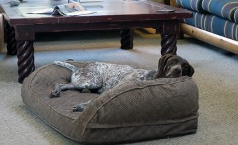 Orvis Bolster Dog Bed with Memory Foam Review