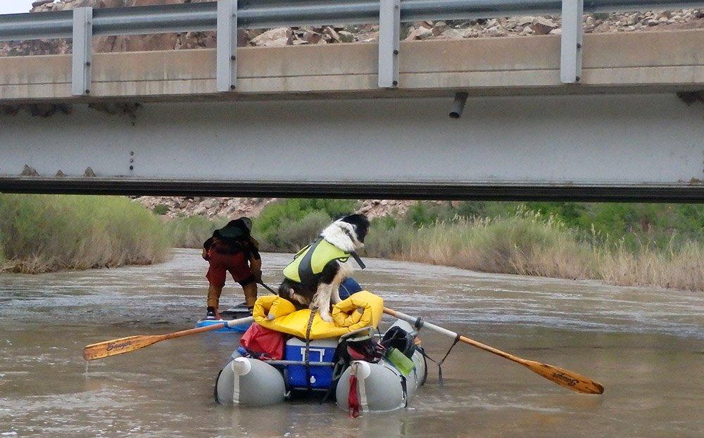 White Water Rafting Dog