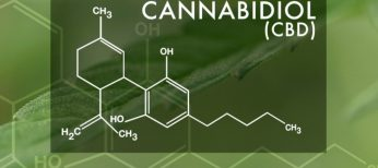 Cannabis & Sports: Can CBD Oil Help with Pain Relief?