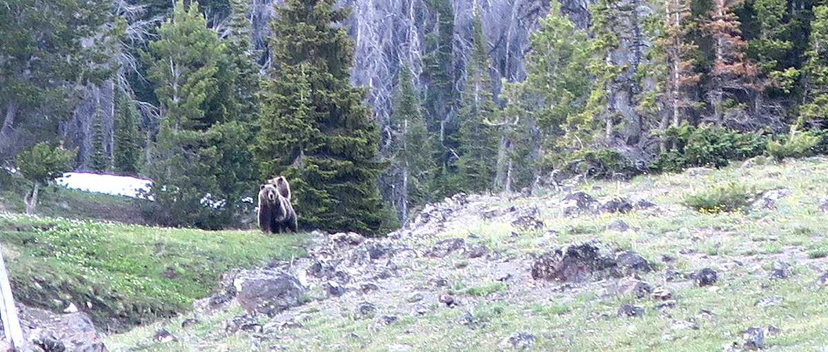 Dunar Valley Mamma Grizzly Bear and Cub