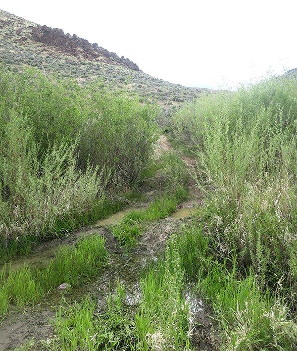 Owyhee Dirt Road 45 Ranch
