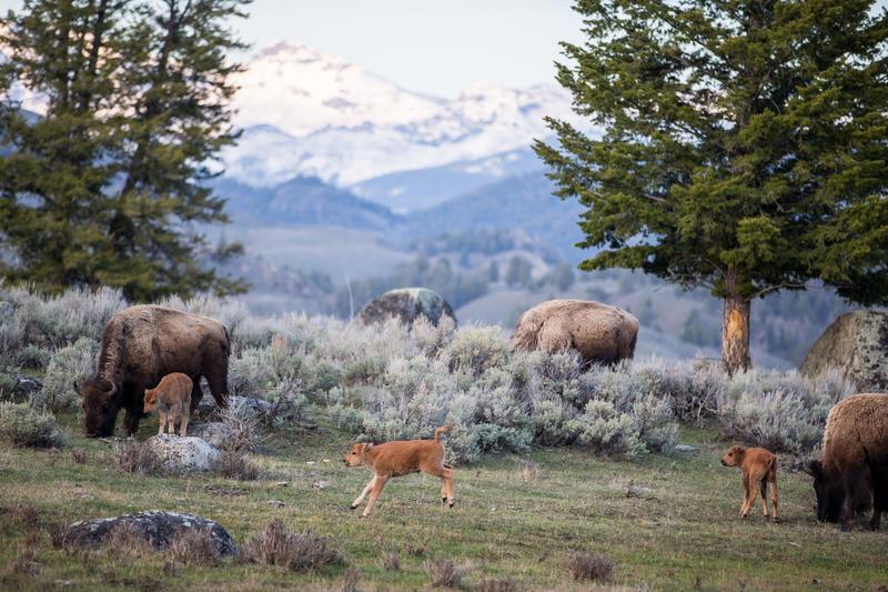 National Geographic Yellowstone