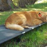 Helinox Lite Cot Offers a Good Nights Sleep Outdoors