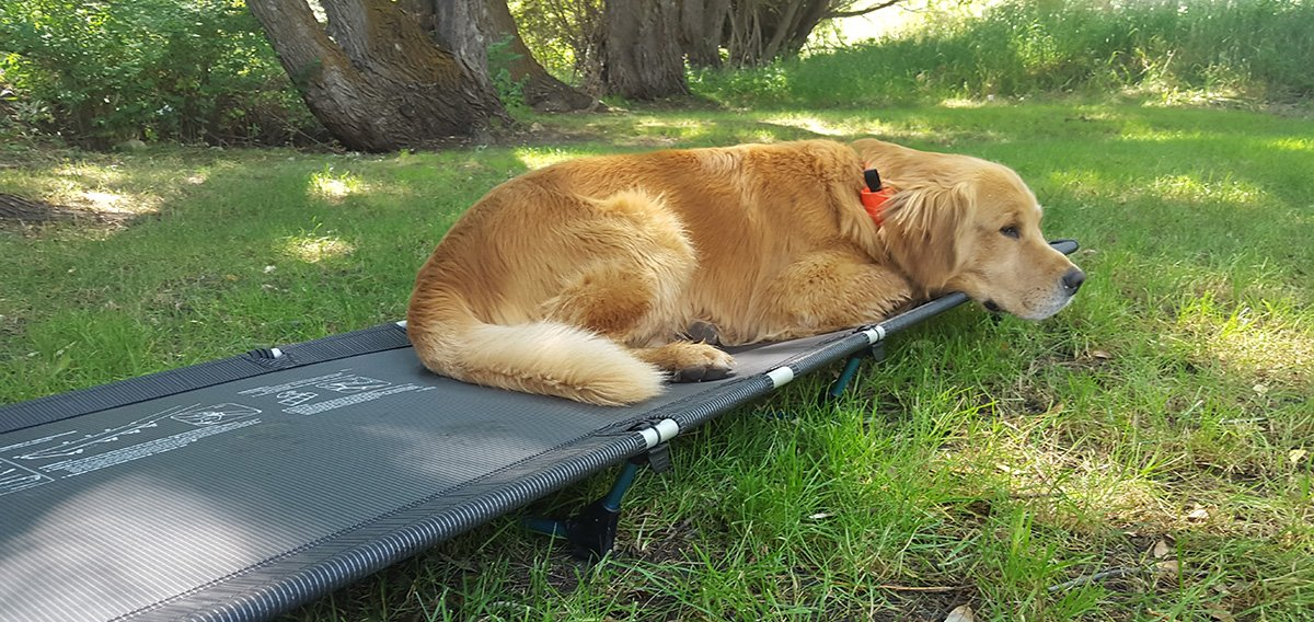 A Dog enjoying laying in a Big Agnes Helinox Cot