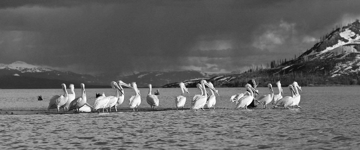 Jackson Lake, Jackson Hole Wyoming