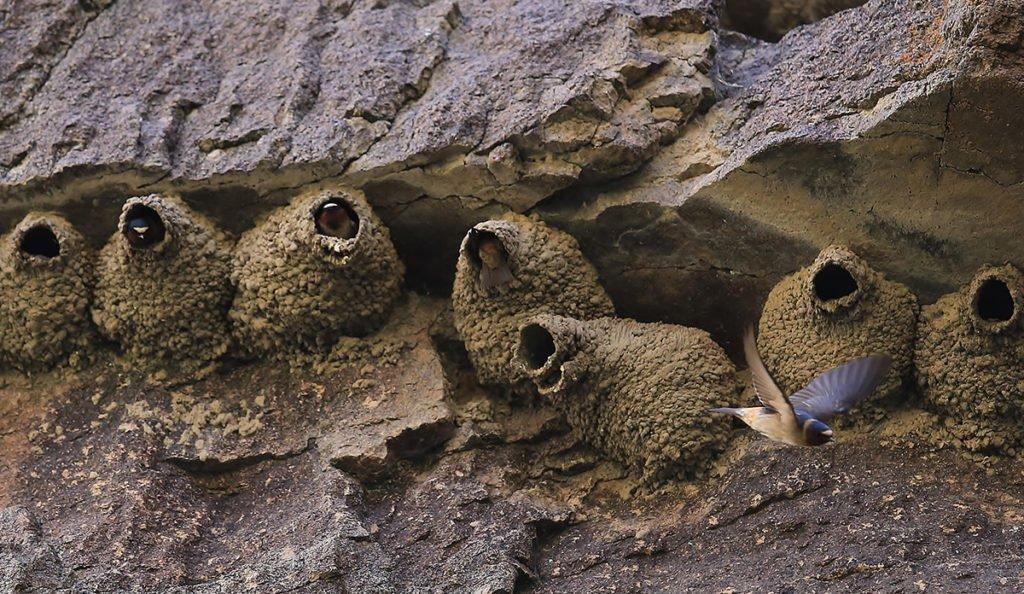 Owyhee River Birds
