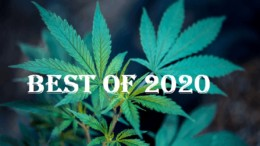 The 10 Best Cannabis Companies of 2020