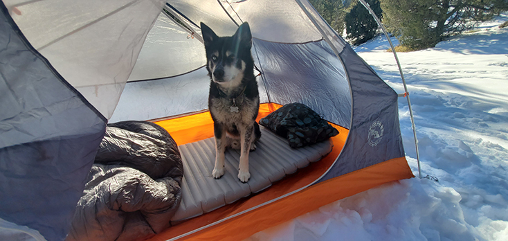 Winter Camping with Dog in Snow